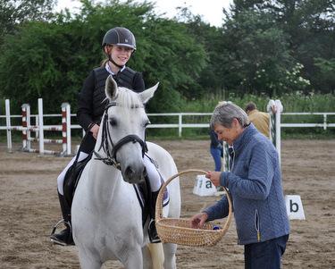 dressur pony til salg